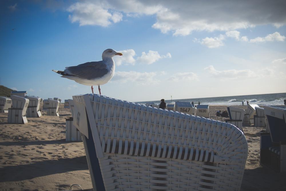 Sylt Strand – Möwe