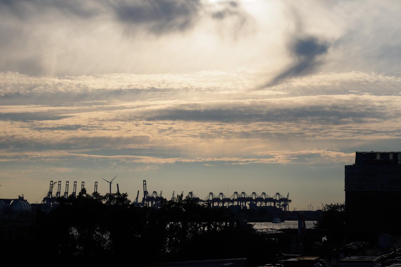 Krähne im Hafen Hamburg