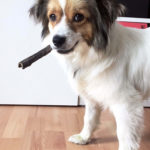 Yaska mit Zigarre
